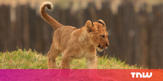 What's new in Apple OS X Lion - TNW Apple
