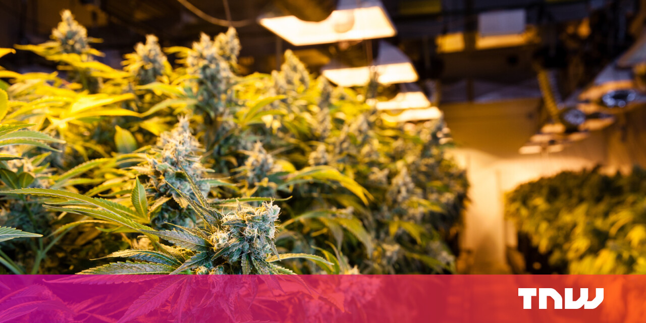 Microsoft's getting into the (legal) weed business