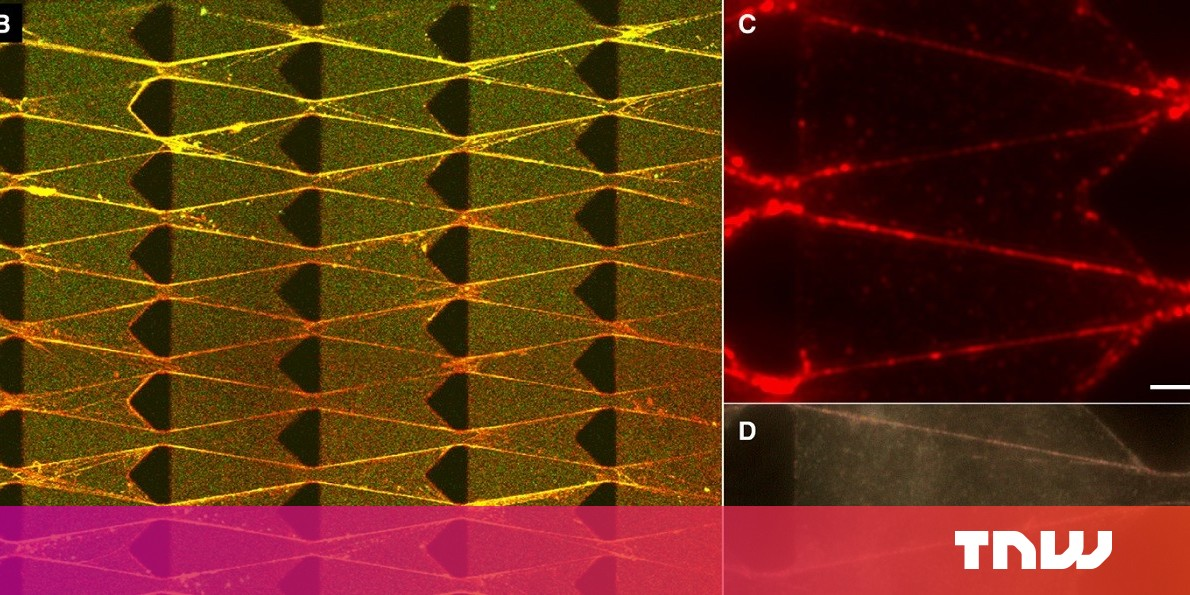 Cornell scientists create 'living' machines that eat, grow, and evolve