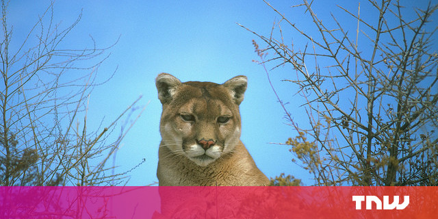 Apple Unveils Mac OS X 10.8 'Mountain Lion'
