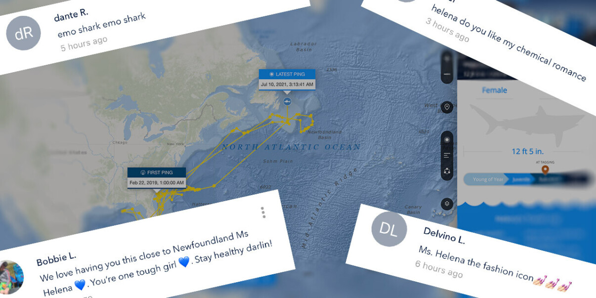 The internet's best comment section is on a shark tracker app