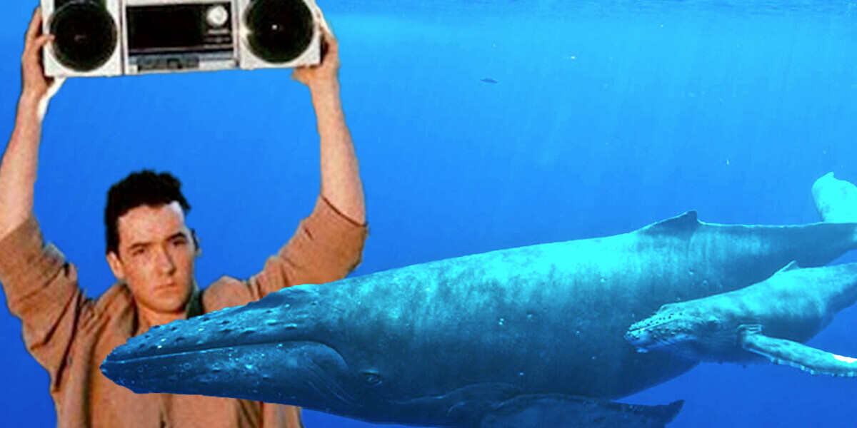 Scientists think they can finally speak to whales. Maybe they shouldn't?