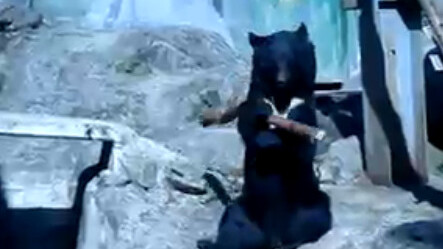 Ninja Bear! Maybe one of the strangest things i've seen.