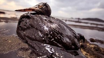 Oil Reporter mobile app puts tracking the spill in the hands of the crowd