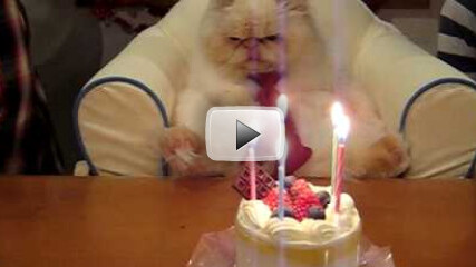 You've gotta see this. The birthday cat is not amused [video]