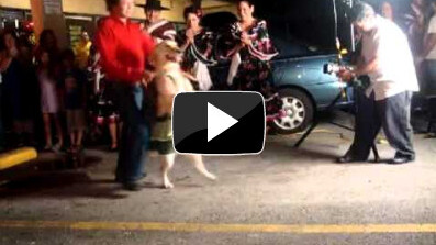 Dog dances the Merengue pretty well actually