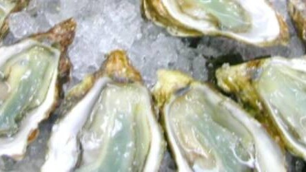 """Love oysters? Check out Oysterpedia, an """"app-hrodisiac"""""""