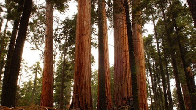Sequoia Capital adds $1.3 billion to its funding coffers