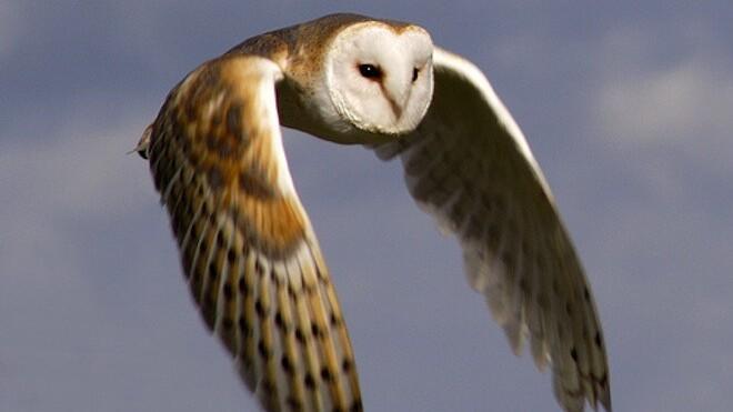 HootSuite's pivot: Introducing Happy Owls