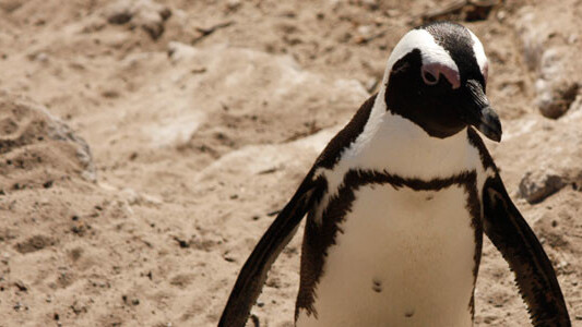 Torvalds updates Linux kernel to 3.0, hits 20 year milestone