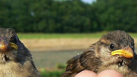 Sparrow now being advised by creators behind Tweetie and Path