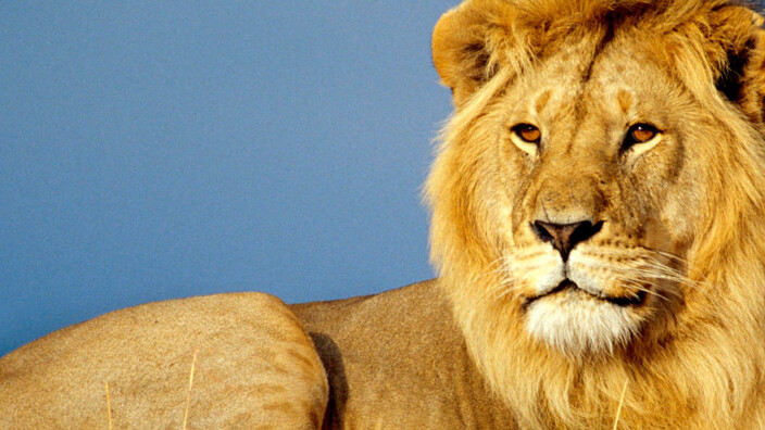 It's here! Mac OS X Lion now available for download