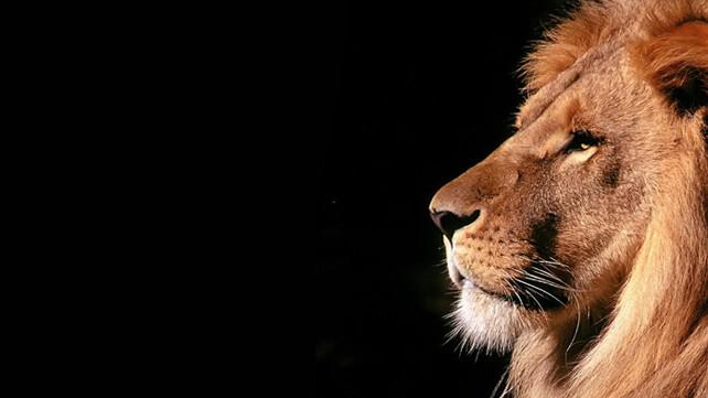 TNW Review: OS X Lion