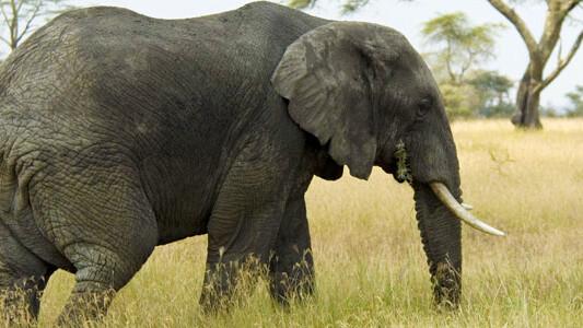Despite uproar, the market didn't care that Bob Parsons shot an elephant.