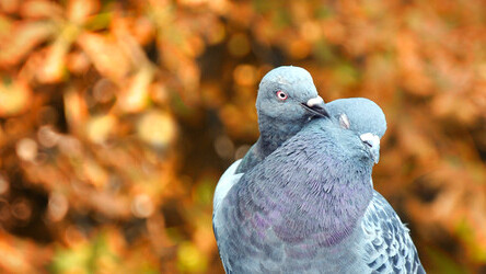 Pigeons, Sex and Investing