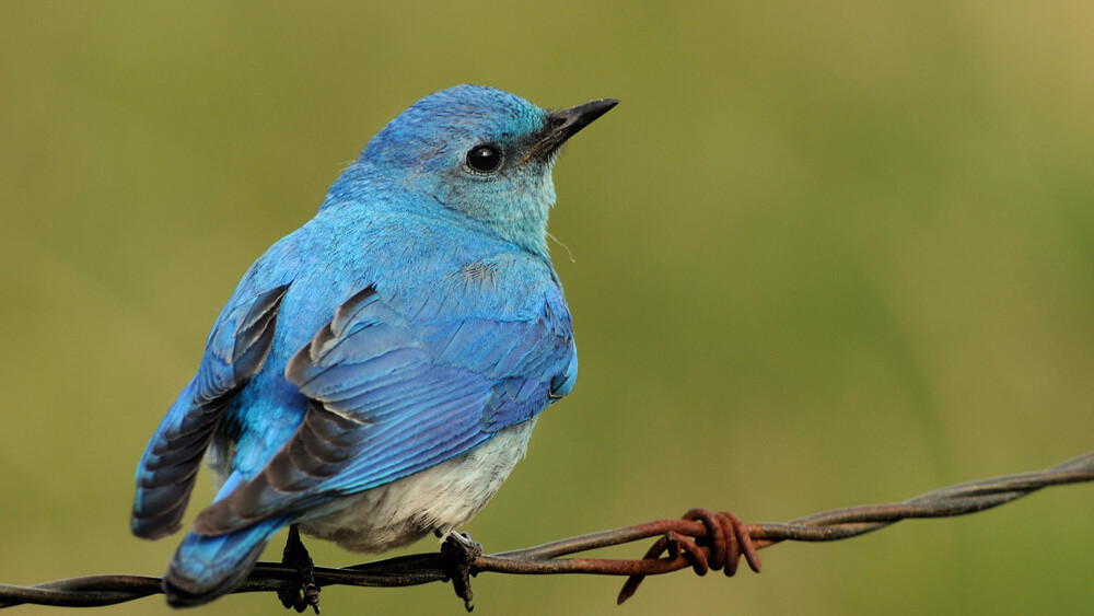 7 Ugly Twitter Birds
