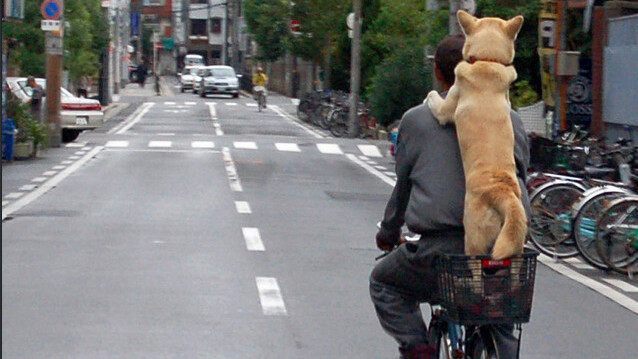 The chillest bike riding dog ever? Only in China…