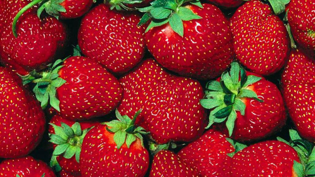 Strawberry Earth launches as Europe's first green Groupon