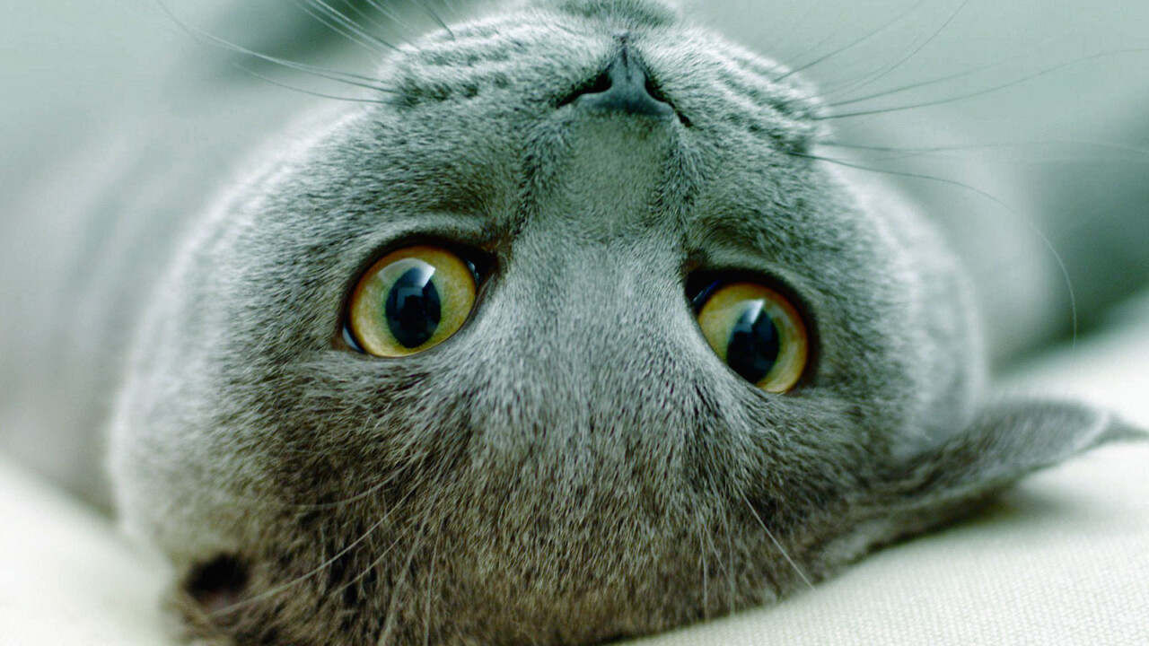 """The world's first """"Catvertising"""" agency launches in Canada"""