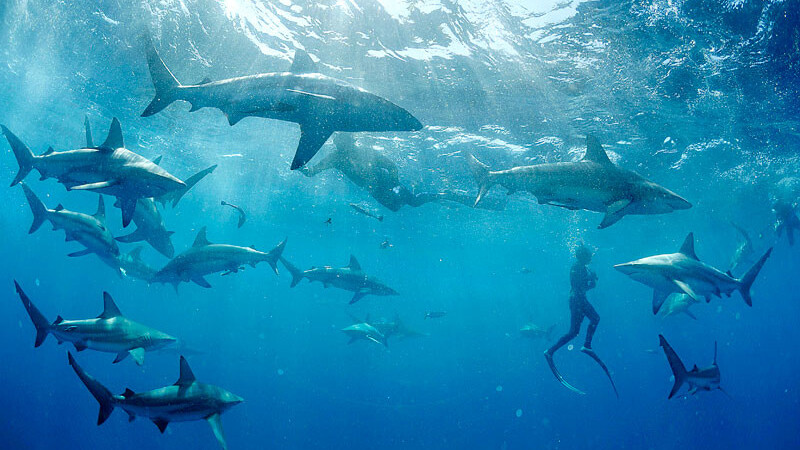 Google Offers is now live in Brooklyn: Starting with $4 for SHARKS!