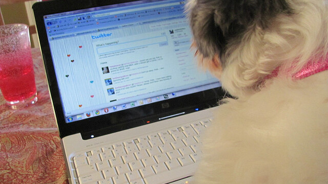 Study reveals that 14% of you have set up a Facebook profile for your dog