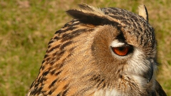 HootSuite hits 3 million signups, sees 1m new accounts in 6 months