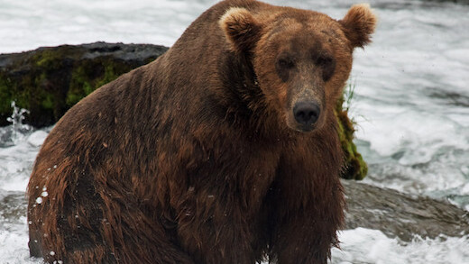 Bear CSS creates the perfect stylesheet template based on your HTML