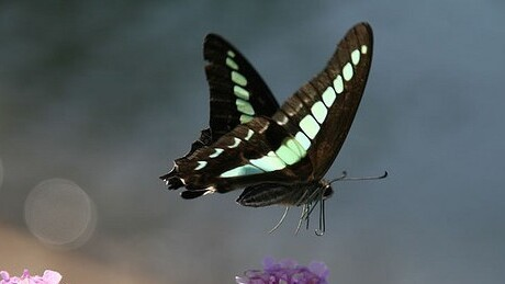 Two worlds collide: Twitter, the butterfly effect and the future of Journalism