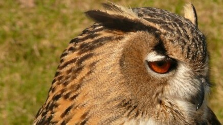 HootSuite releases its Engagement API and adds Digg, Trendspottr, and InboxQ apps
