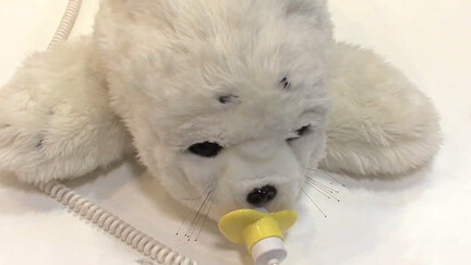 Fluffy robotic seals are helping to ease the pain of tsunami survivors in Japan