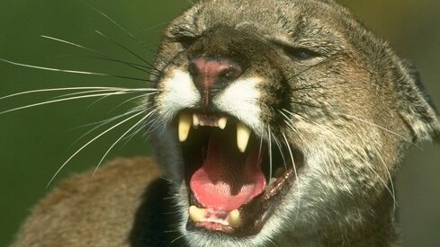 Apple's strange PR move: No on-stage debut for OS X Mountain Lion
