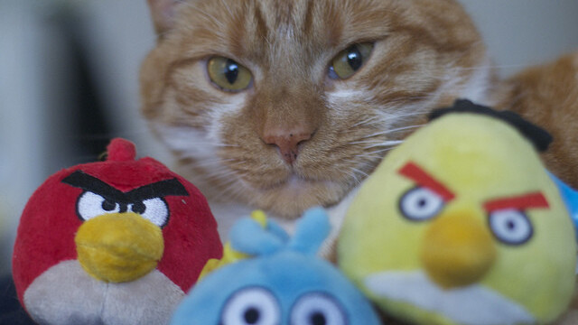 Watching the Angry Birds Space promo videos almost guarantees that you'll buy it
