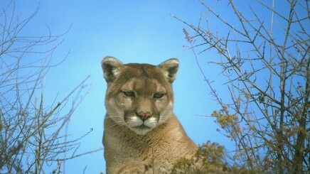 Apple releases OS X 10.8 Mountain Lion Developer Preview 2, lists known issues