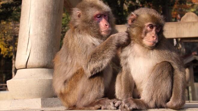 MiniMonos wants to bring more little monkeys into kids' lives, raises €1 million