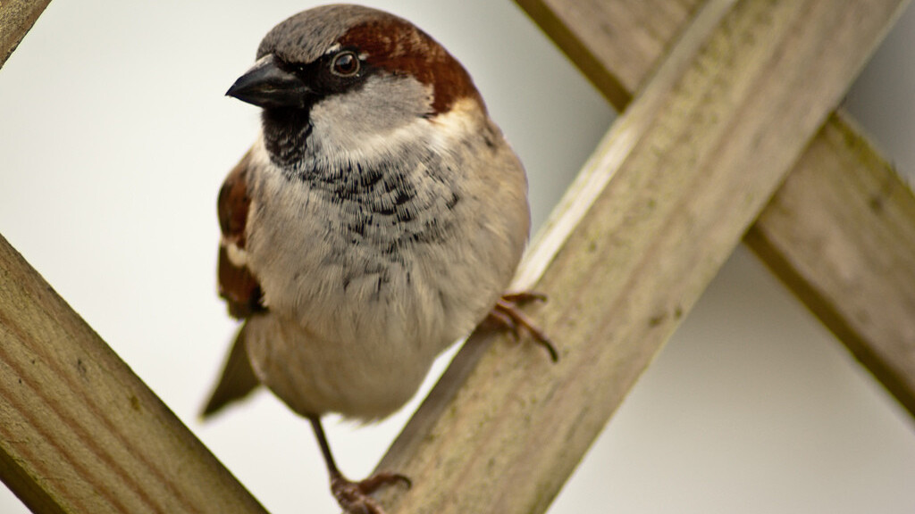 Sparrow for iPhone 1.2.1 fixes navigation gestures and localisation, but still no push