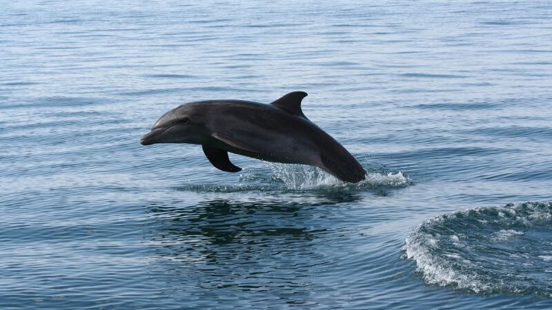 Dolphin reaches 50m users, launches new Jetpack addon to supercharge its Android browser