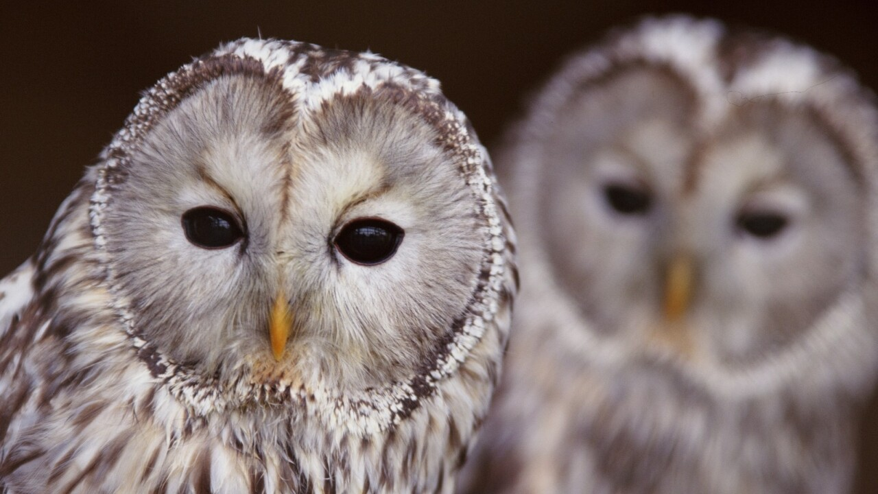 HootSuite adds Reddit, StumbleUpon and more to its ever-growing App Directory