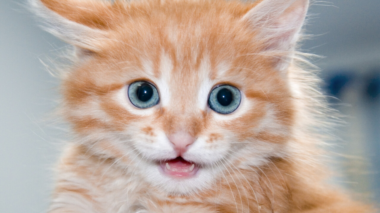How Catmoji got 7,000 users to share 21,000 cat video and pictures in one month