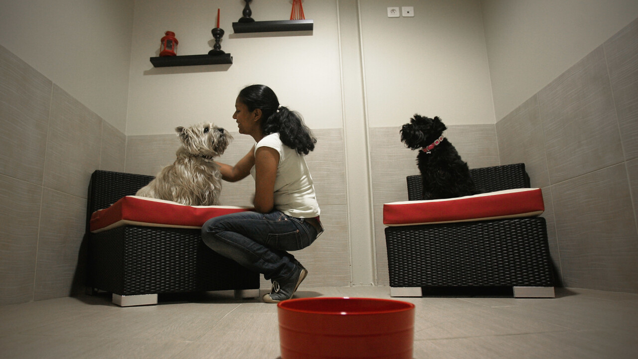 Airbnb for dogs Rover.com raises $7m led by The Foundry Group, rolls out Animoto-powered video service