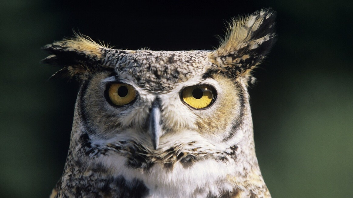 Hootsuite nabs $165M Series B led by Insight Ventures to fuel expansion in Latin America and Europe