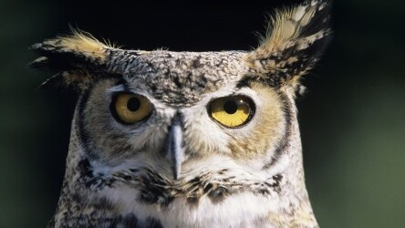 HootSuite updates its web and mobile apps to support Russian and VKontakte social network