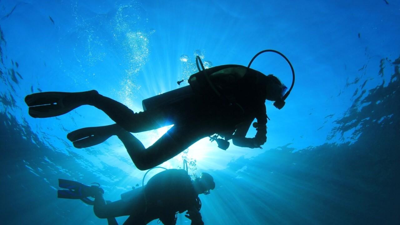 Diveboard: Meet the Scuba startup using citizen science to monitor underwater species
