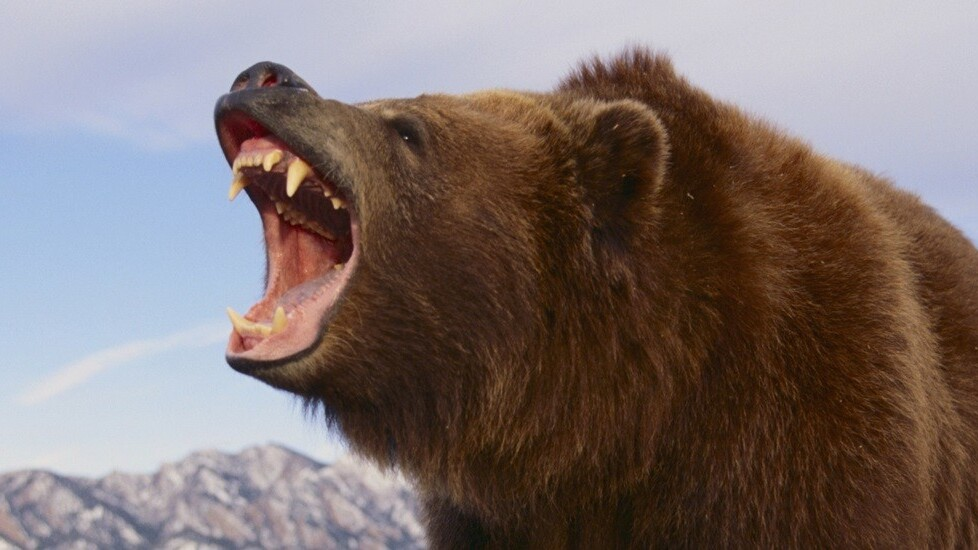 Beautiful VPN service Tunnelbear gains always-on data privacy and performance enhancements