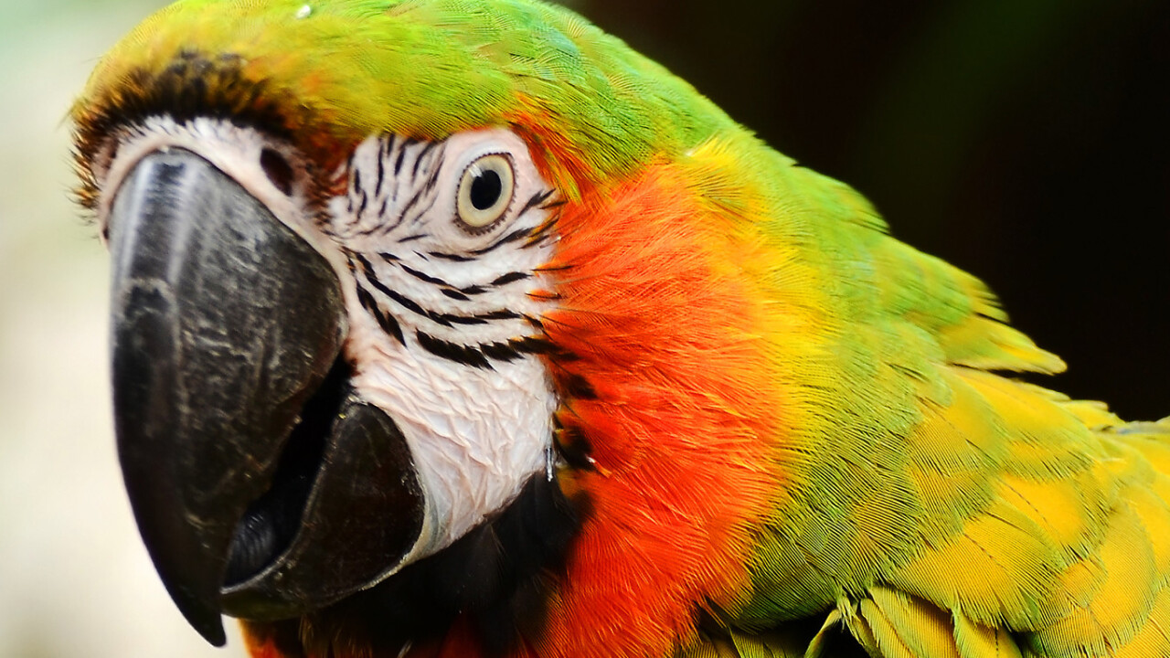 Macaw, the Web design tool for programmers, hits Kickstarter. Here's an overview of why it's different