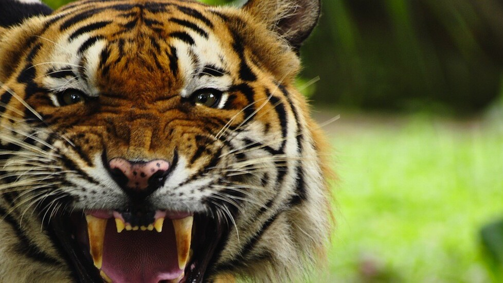 Tiger Pistol taps crowd intelligence to help small firms use Facebook more effectively