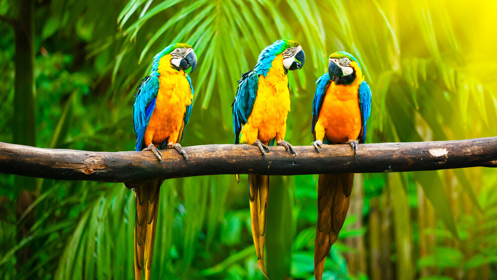 Web design tool for programmers Macaw finishes Kickstarter campaign at $275,000, more than triple its goal
