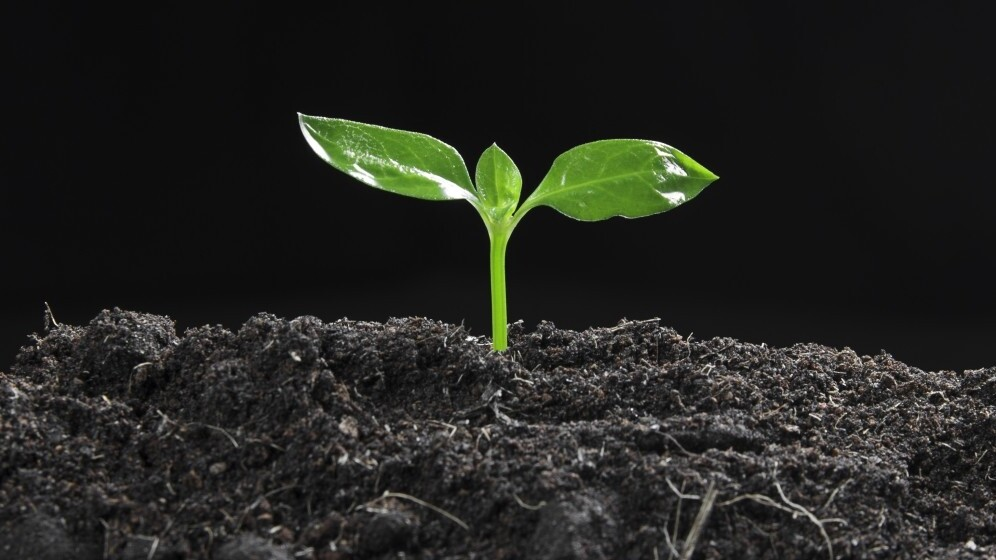 3 things you can change to go from startup to grown up