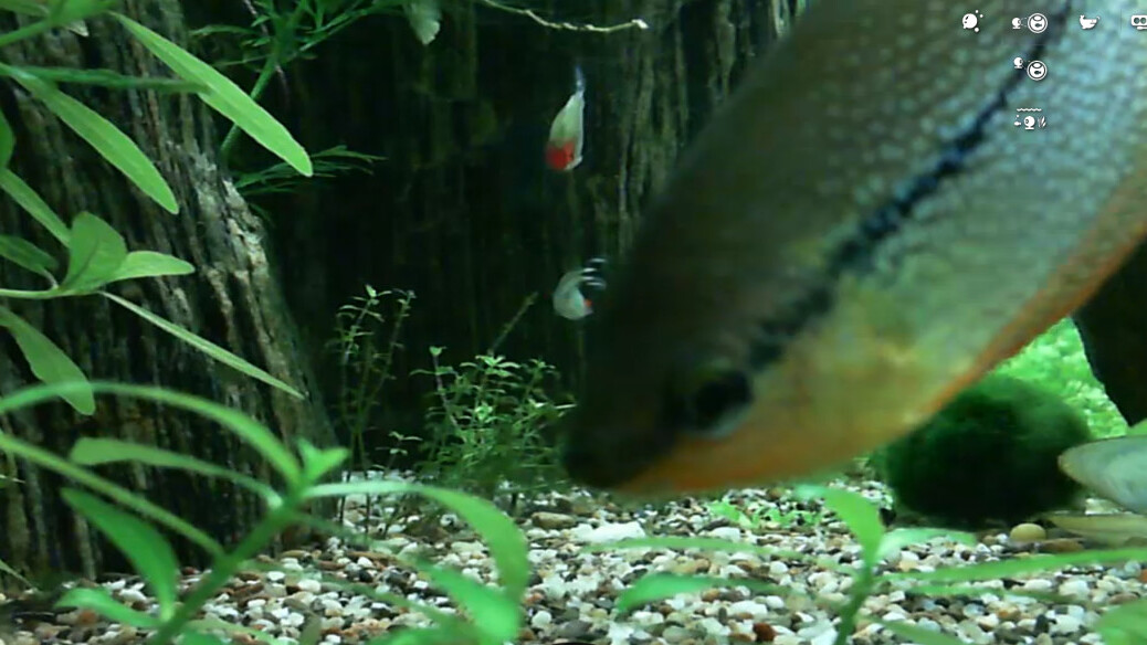 Bored at your desk? Kill a few minutes by feeding some real fish via this Web app
