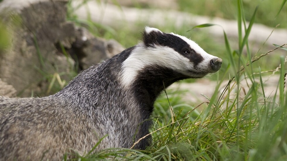 EFF's new Privacy Badger Chrome extension helps prevent online tracking