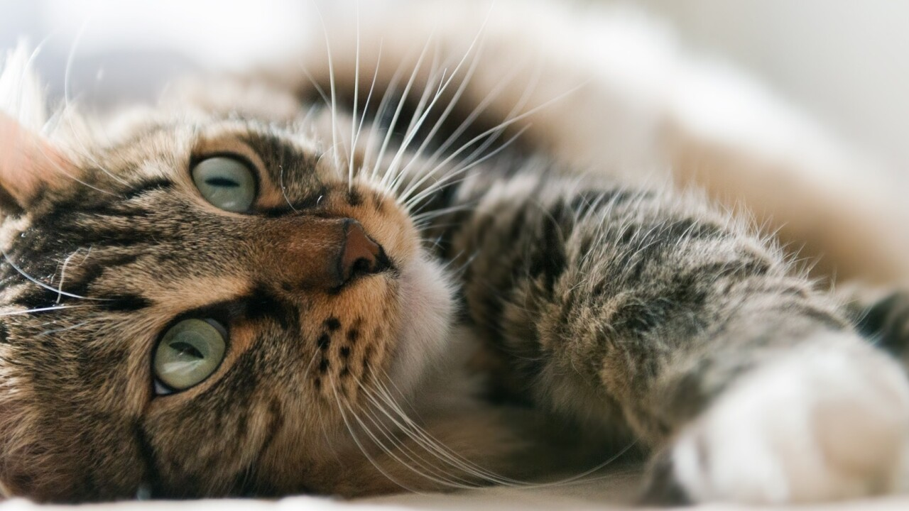 How cat photos can reveal privacy issues with what you share online